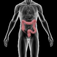 Anatomical image of human colon.